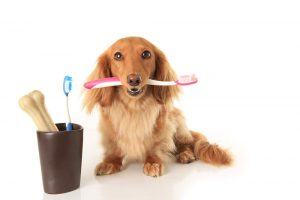 simi valley pet dentistry