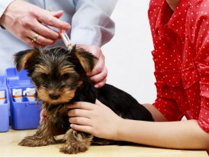 pet wellness and vaccination exam in simi valley