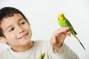 exotic pet care simi valley